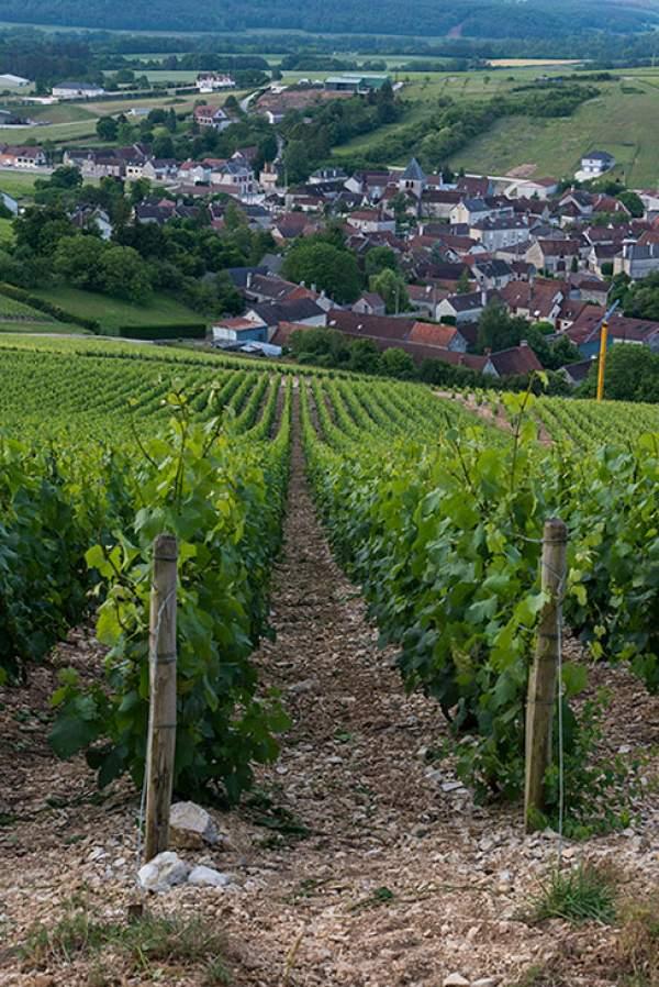 La nouvelle cuvée millésime 2011 du champagne Gremillet